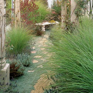 walkway-ornamental-grasses_0.jpg